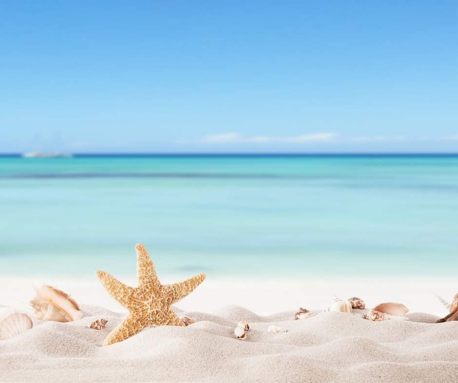 Psoriasis Eczema Clinic Summer Newsletter December 2019
