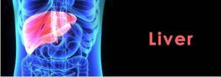 Liver Disease Image