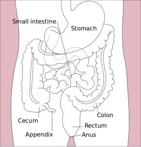 stomach_etc_diagram-en-wikkip